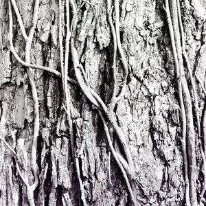 Abstract Black & White Photo Wall Art Tree Bark  3